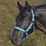 Waldhausen Halfter Pferdemotiv, azurblau, WB, azurblau, Warmblut