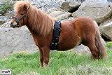 Longiergurt Plüschi Minishetty/Shetty Pony Tysons Nylon mit Teddyfell Bauchgurt extra (Pony)