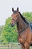 Martingal BASIC, Pony, schwarz/NP