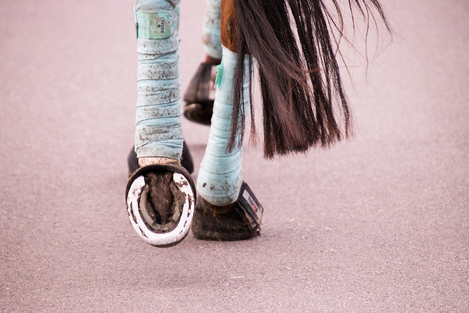 Bandagieren beim Pferd