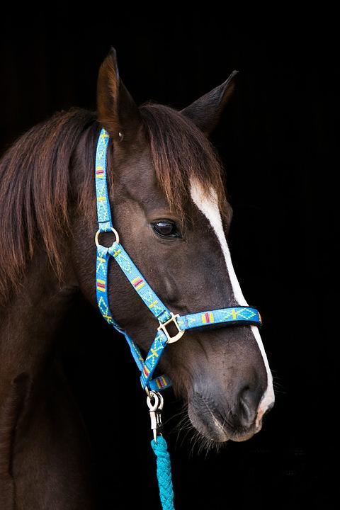 Halfter Pferd
