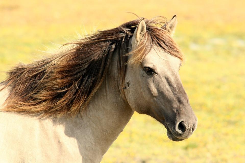Pferd Natur