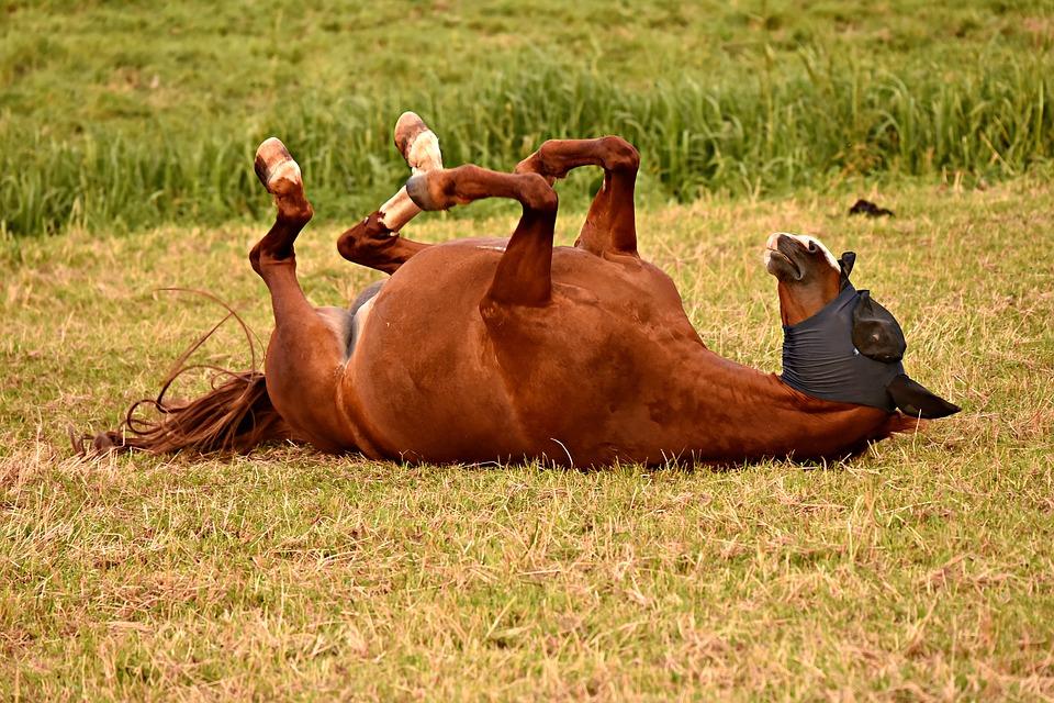 Pferd am Boden
