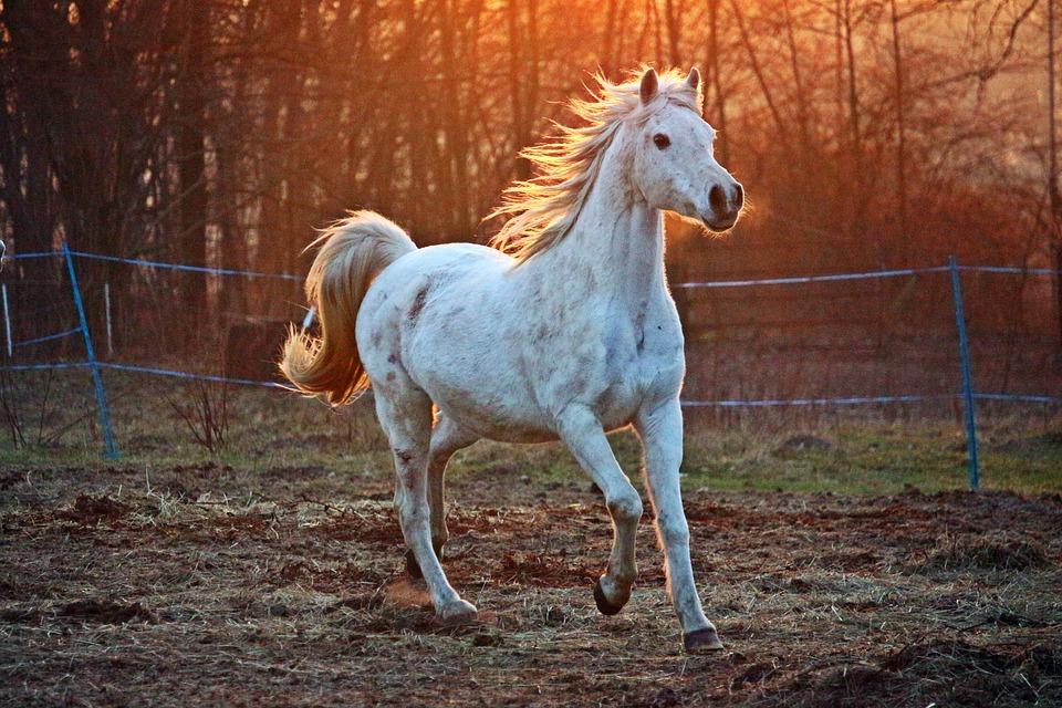 Pferd im Sonnenlicht