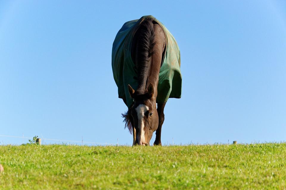 Pferd mit Abschwitzdecke