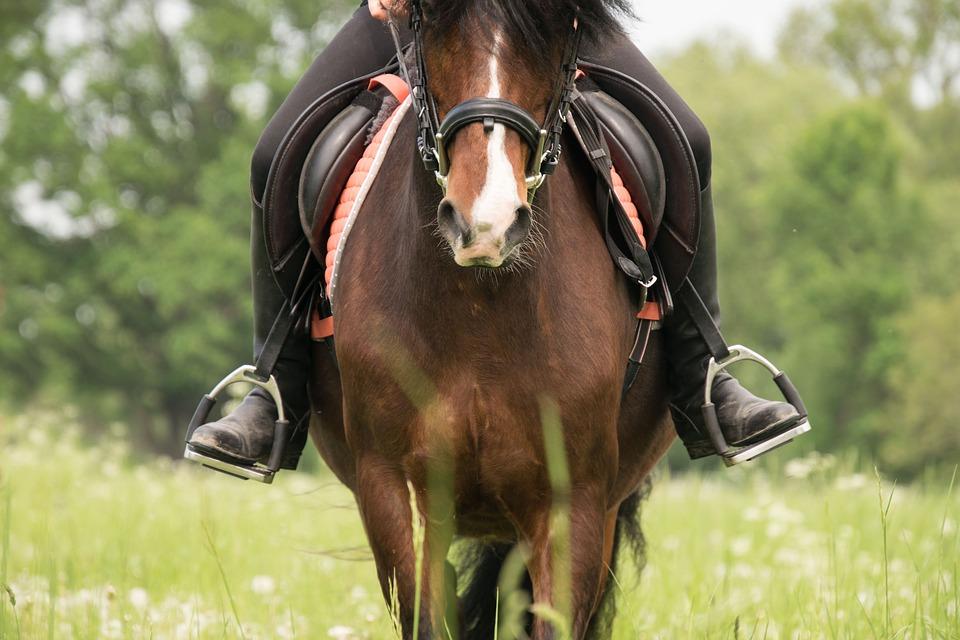 Pferd mit Steigbügeln