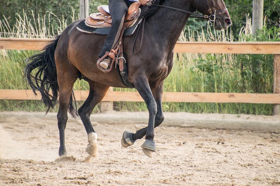Pferd mit Westernpad