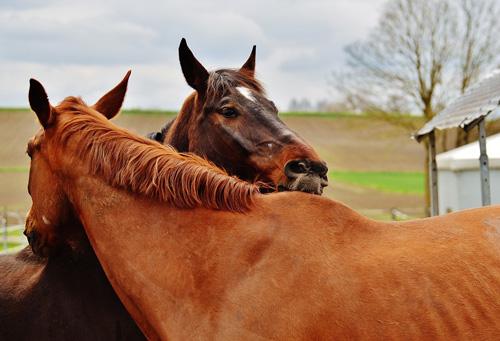 Pferde Harmonie