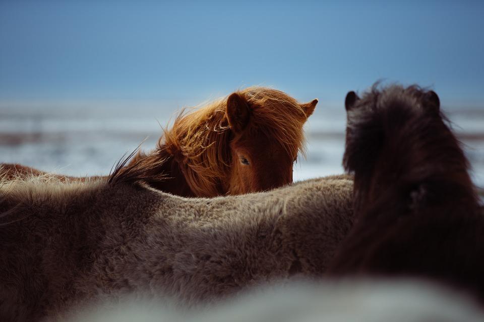 Pferde im Freien