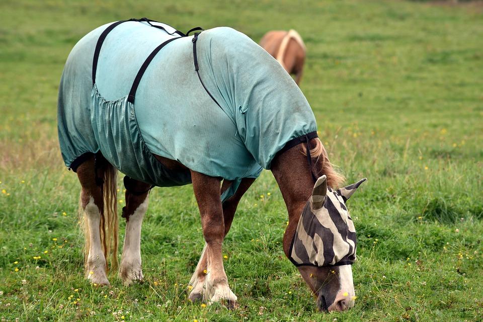 Pferdedecke in Benutzung