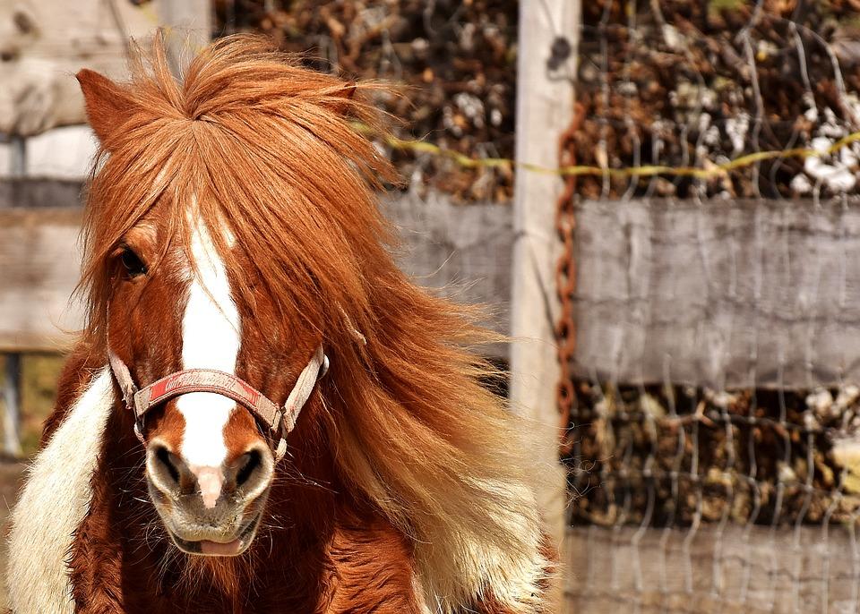 Pony niedlich