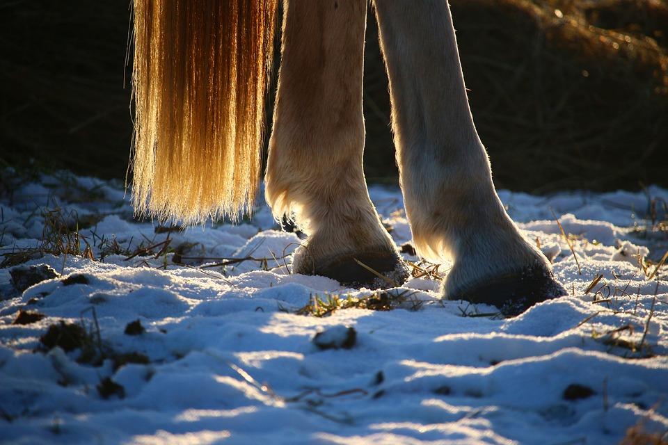 Reiten Winter