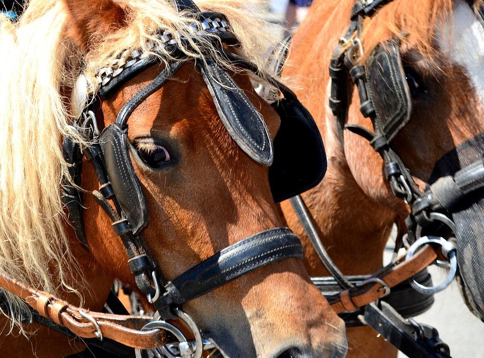 Zaumzeug Pferd
