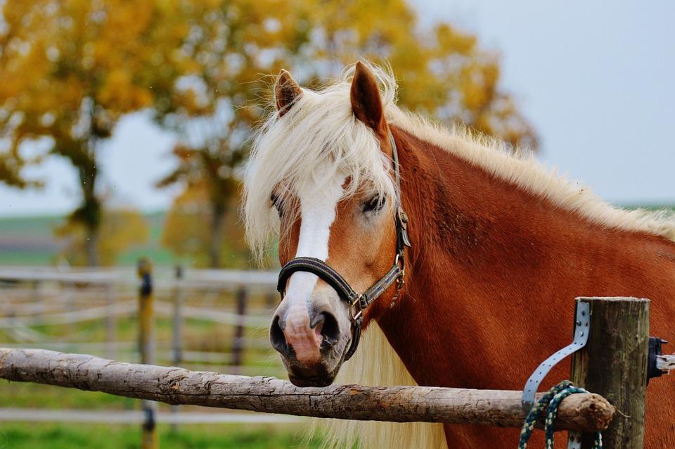 kleines Pferdchen