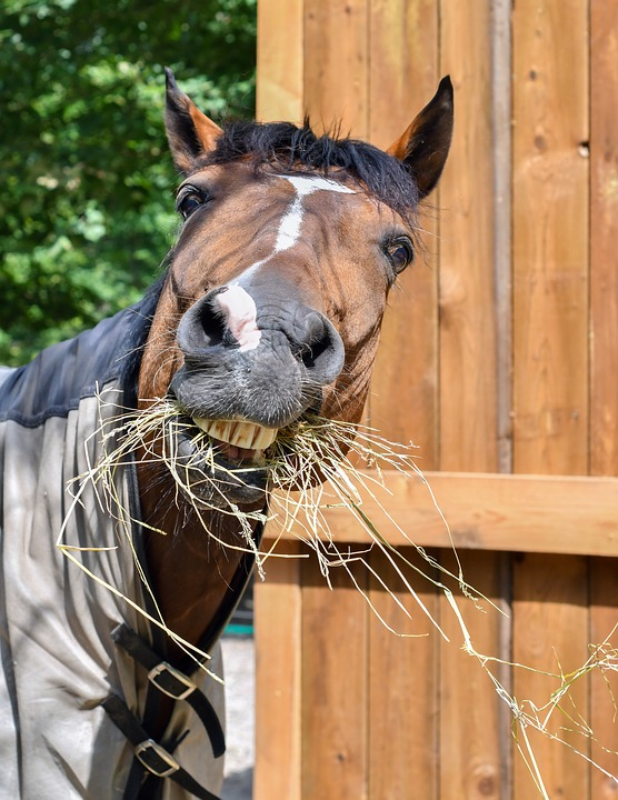 lustiges Pferd isst Heu
