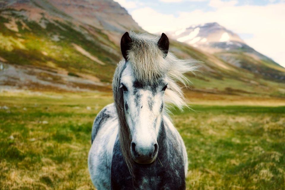 süßes Pferd