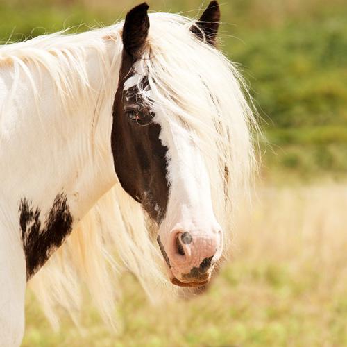 süßes Pony