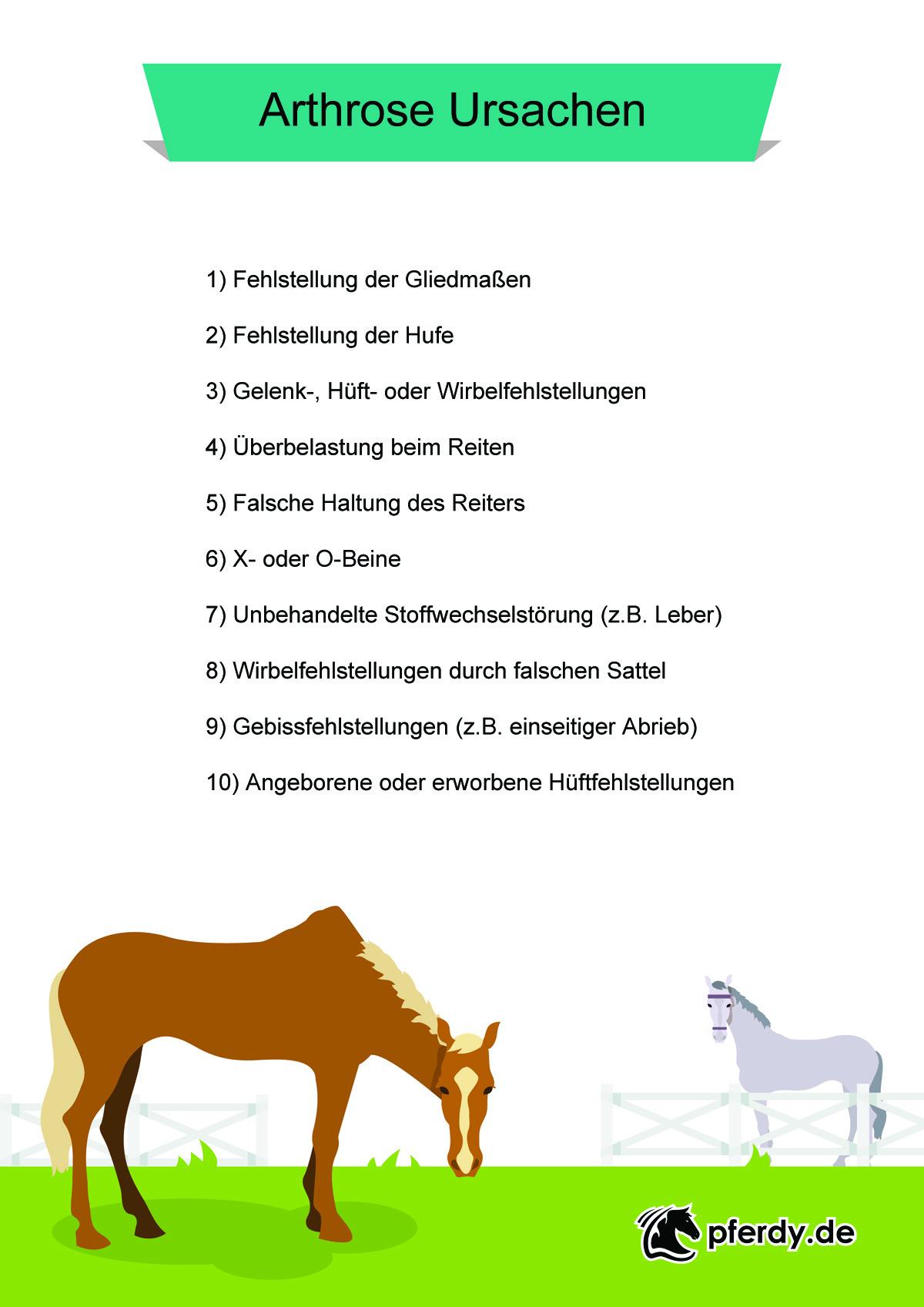 Arthrose Pferd Ursachen