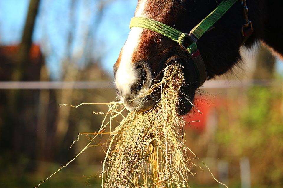 Heu Fütterung Pferd