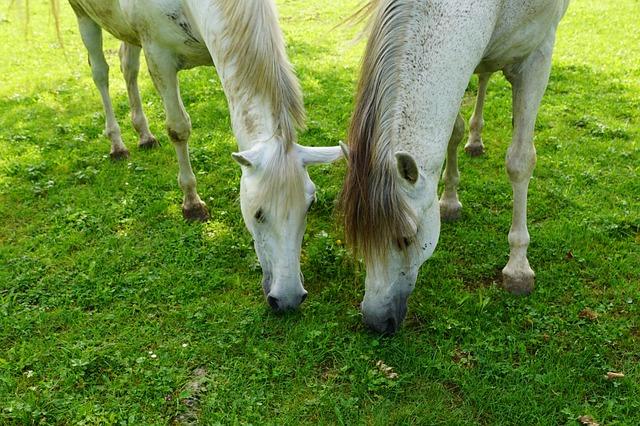 Pferd gesund