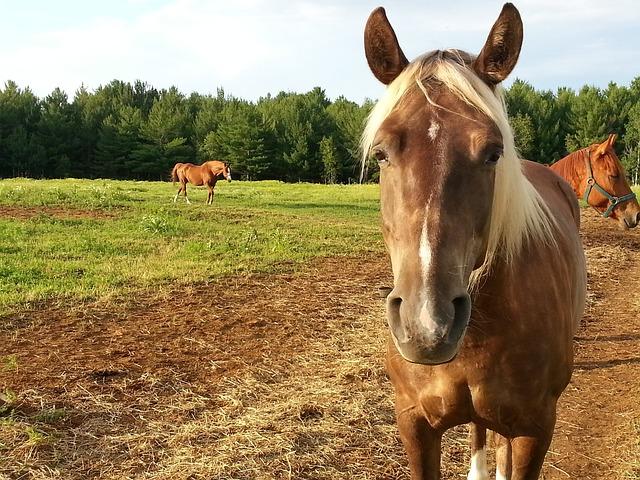 Pferd traurig